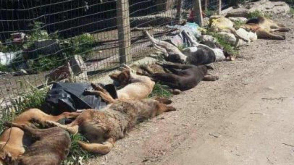 Cani avvelenati a Sciacca (feb 2018)