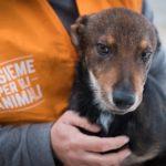 Amministrare da cani: un bando controverso per il canile di Palermo